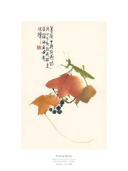 Product: Praying Mantis print