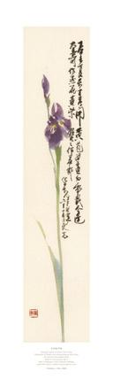 Product: Long Iris print